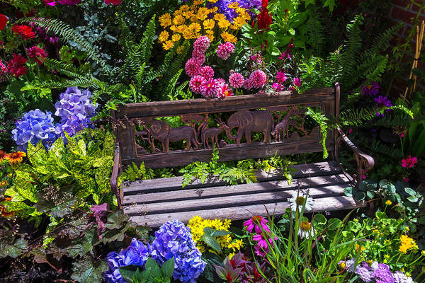 Wall Art - Photograph - Animal Bench by Garry Gay