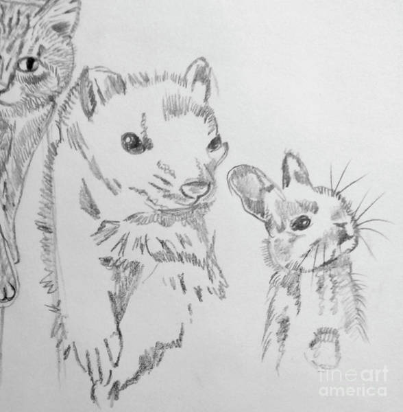 Ferrets Drawing - Animal Friends by Susan Paquette