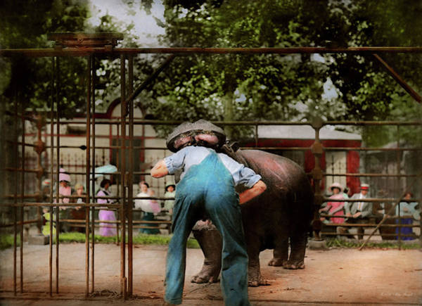 Photograph - Animal - Hippo - Stupid Human Tricks 1910 by Mike Savad