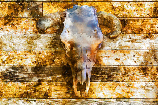 Wall Art - Mixed Media - Animal Skull by Kevin O'Hare