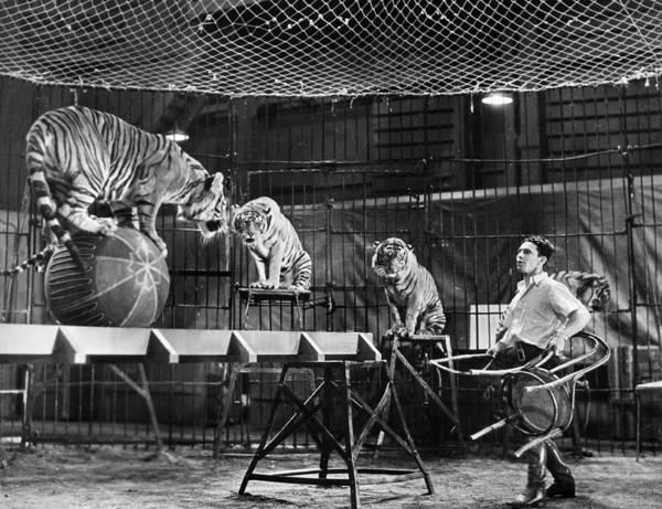 Carnies Photograph - Animal Tamer, 1930s by Granger