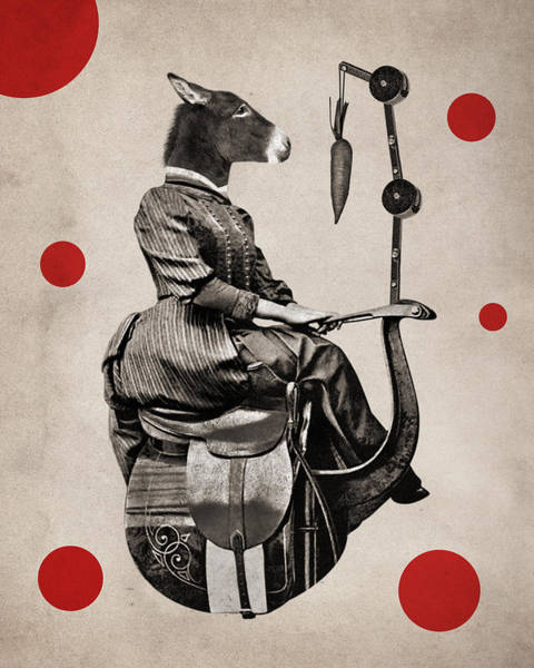Saddle Photograph - Animal11 by Francois Brumas