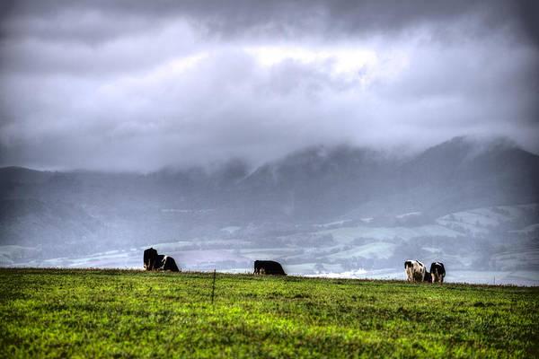 Photograph - Animals Livestock-03 by Joseph Amaral