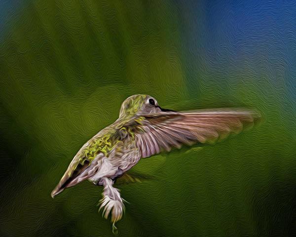 Digital Art - Anna's Hummingbird Op54 by Mark Myhaver