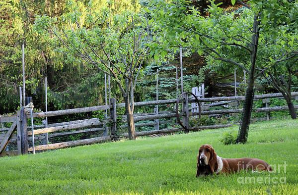 Photograph - Annie In Her Yard by Karen Adams