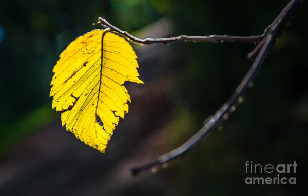 Photograph - Announcing The Fall Season  by Michael Arend