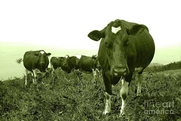 Wall Art - Photograph - Annoyed Cow by Gaspar Avila