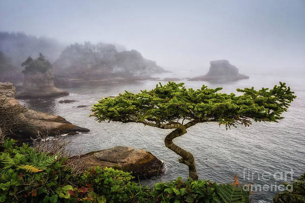 Photograph - Another Bonsai by Carrie Cole
