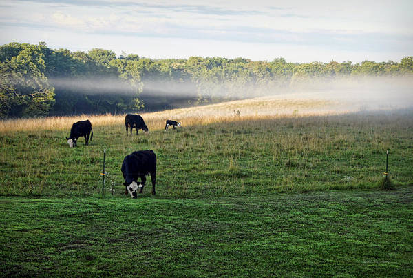 Photograph - Another Quiet Morning by Cricket Hackmann