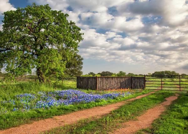Photograph - Bluebonnet Ranch Road by Harriet Feagin