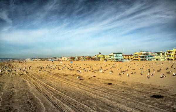 Photograph - Another Seagull Afternoon by Michael Hope