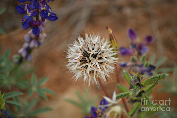 Photograph - Another White Flower by Donna Greene