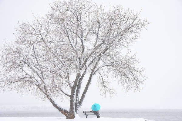 Photograph - Another Winter Alone by Darren White