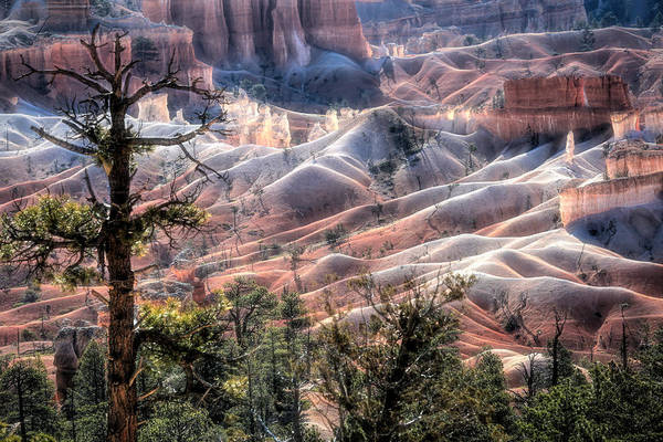 Wall Art - Photograph - Another World At Bryce by Donna Kennedy