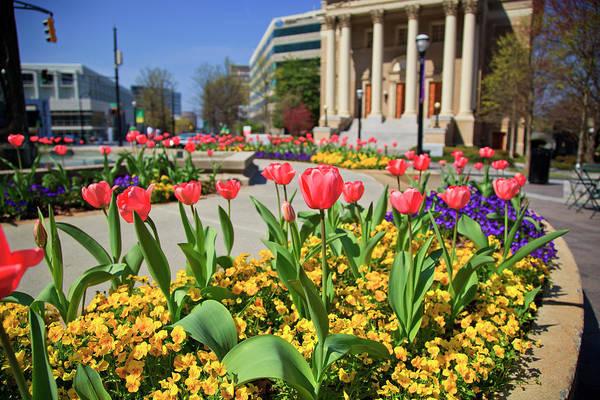 Photograph - Ansley Park Atlanta by Jill Lang