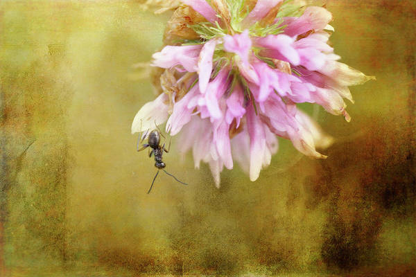 Wall Art - Photograph - Ant Acrobatics by Susan Capuano