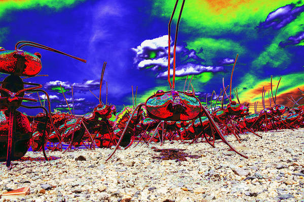 Habenero Photograph - Ant Invasion by Richard Henne