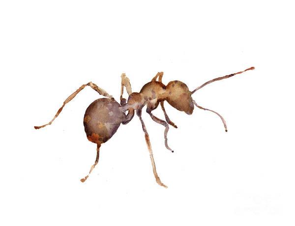 Ant Mixed Media - Ant Watercolor Art Print Painting by Joanna Szmerdt