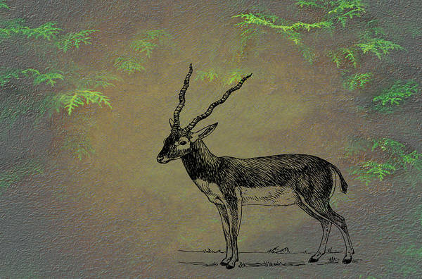 Wall Art - Mixed Media - Antelope by Movie Poster Prints