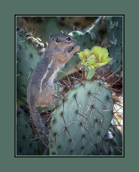 Photograph - Antelope Squirrel Treat 7206-042418-1-matte by Tam Ryan