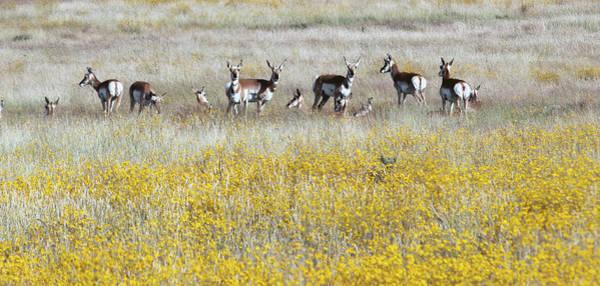 Photograph - Antelopes 7541-092714-2cr by Tam Ryan