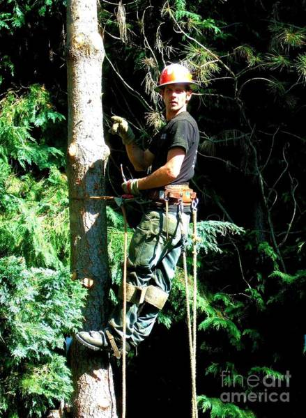 Photograph - Anthony The Tree Cutter In The Pacific Northwest by Delores Malcomson