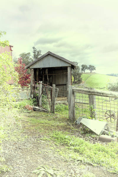 Photograph - Anthony's Shed by Elaine Teague