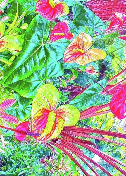 Anthuriums Pink And Turquoise Art Print