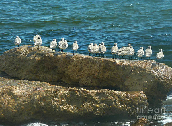 Wall Art - Photograph - Anticipation by Lucyna A M Green