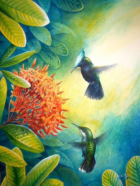 Painting - Antillean Crested Hummingbirds And Ixora by Christopher Cox
