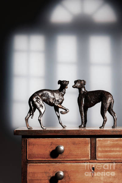 Wall Art - Photograph - Antique Bronze Greyhound Dogs by Amanda Elwell