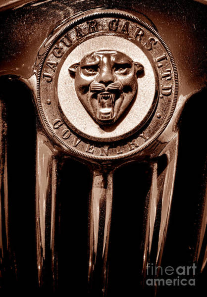 Wall Art - Photograph - Antique Jaguar Badge And Grille by Olivier Le Queinec