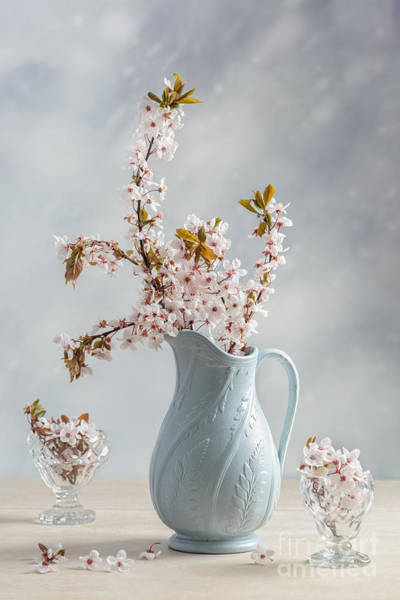 Blue Vase Photograph - Antique Jug With Blossom by Amanda Elwell