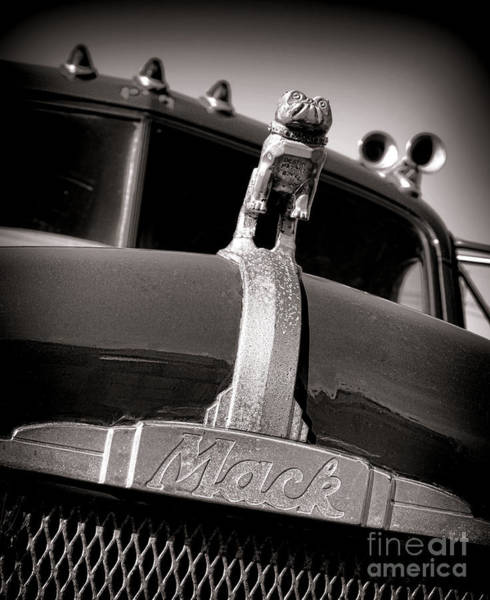 Mack Photograph - Antique Mack Bulldog Hood Ornament by Olivier Le Queinec