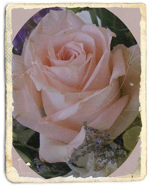 Photograph - Antique Rose by Sharon Duguay