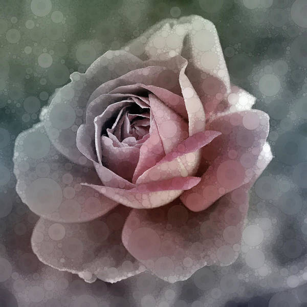 Pretty In Pink Mixed Media - Antique Rose by Susan Maxwell Schmidt