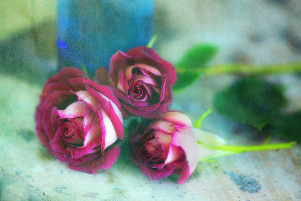 Wall Art - Photograph - Antique Roses by Jade Moon