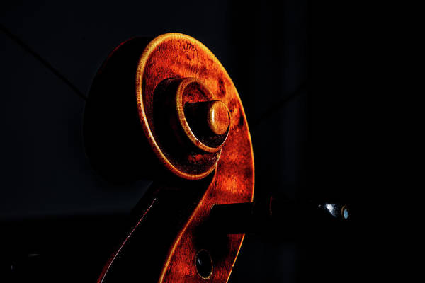 Photograph -  Antique Violin 1732.05 by M K Miller