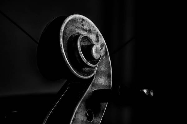Photograph -  Antique Violin 1732.39 by M K Miller