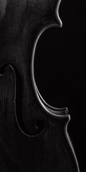 Photograph -  Antique Violin 1732.42 by M K Miller