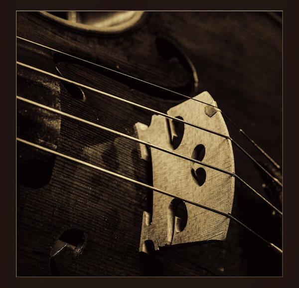 Photograph -  Antique Violin 1732.51 by M K Miller