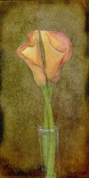 Photograph - Antiqued Lilies by Mary Buck