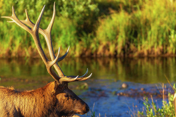 Photograph - Antlers Of An Elk by John De Bord