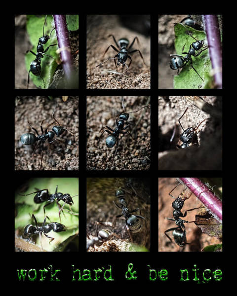 Photograph - Ants Work Hard Be Nice by Christina VanGinkel