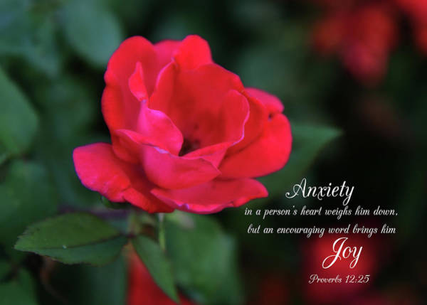 Photograph - Anxiety To Joy Proverbs by Denise Beverly