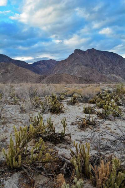 Photograph - Anza Borrego Desert Portrait by Kyle Hanson