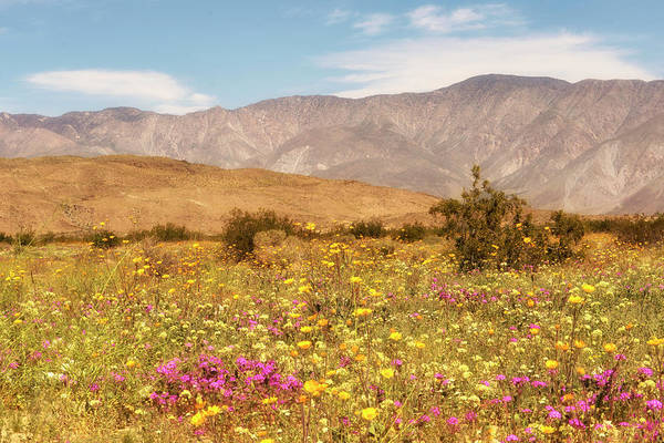 Photograph - Anza Borrego Desrt Flowers by Michael Hope