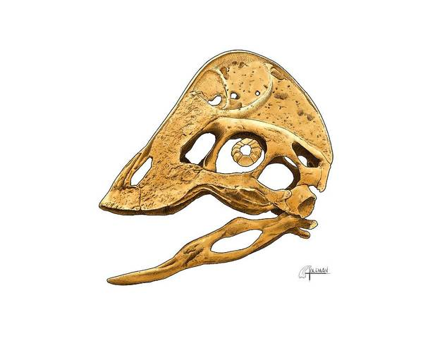 Digital Art - Anzu Wyliei Skull by Rick Adleman
