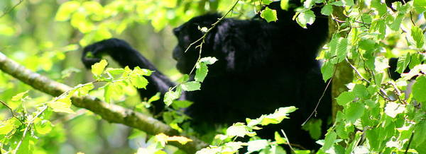 Wall Art - Photograph - Ape-sit by Stevie Smudge
