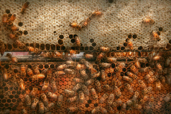 Photograph - Apiary - Bee's - Sweet Success by Mike Savad